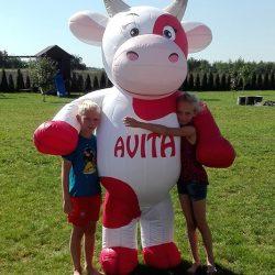Kostium dmuchana krowa 2,4m Avita